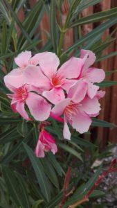 fleur, symbole du présent inspiration de citations
